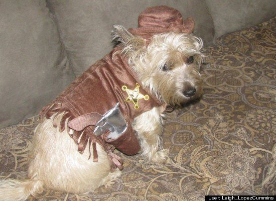 30 Hilarious Pet Halloween Costumes That Will Make Your Day | HuffPost