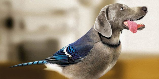 Estate Investors Birds With Dog Heads And Dogs With Bird Bodies Are Dirds Derrrrr Huffpost Birds With Dog Heads And Dogs With Bird Bodies Are Dirds Derrrrr