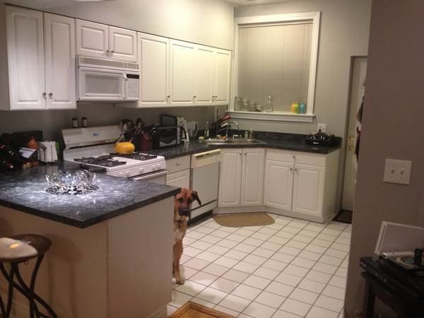 "Credit: <a href=""http://laughingsquid.com/dog-photobombs-every-picture-in-craigslist-apartment-listing/"" target=""_blank"">imgu"