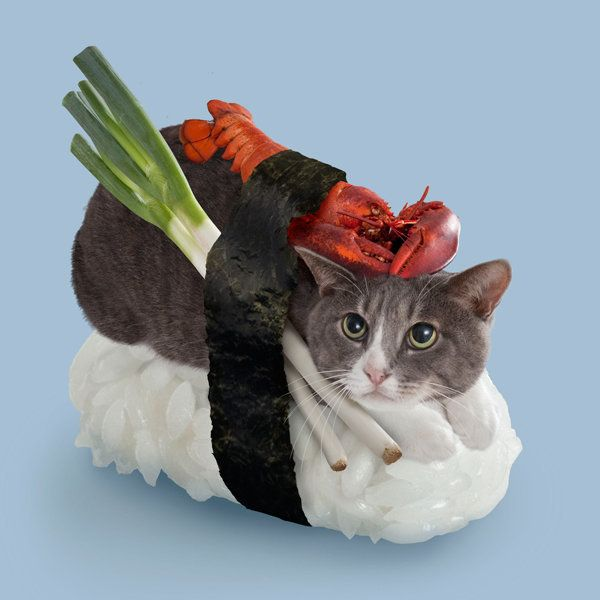 Hero of all Sushi Cats, so he must carry the burden of being the vegetarian lobster.