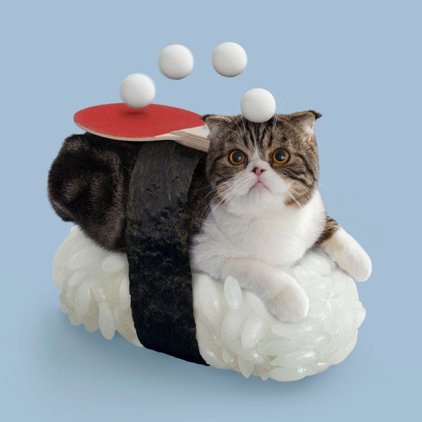A strange Sushi Cat with mysterious powers whose footsteps are always stealthy.