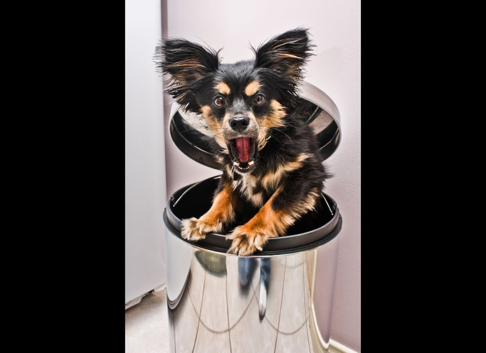 The trend toward raw, organic, and/or home-prepared food is partially driven by health considerations.  Commercial dog food i