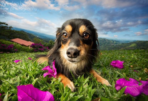 Sprinkles was abandoned in a parking lot in Atenas, Costa Rica.  She is now available for adoption through Lighthouse Animal