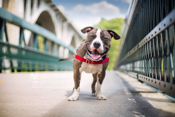 """Joshua from the <a href=""""http://www.mspca.org/adoption/methuen-nevins/"""" target=""""_blank"""">MSPCA at Nevins Farm</a> in Methuen,"""
