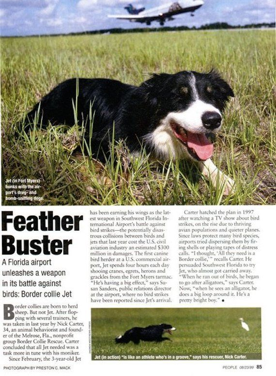 "In 1999, the Border Collie earned Southwest Florida International Airport the title of the ""<a href=""http://www.flylcpa.com/u"