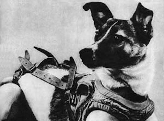 On November 3, 1957, this Russian pup was one of the first animals to be launched into space. Laika, a stray found on the str