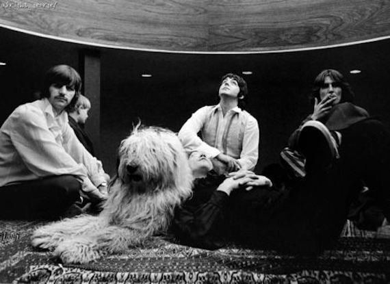 """Martha My Dear,"" The Beatles' sweet, poppy track, released in 1968, was inspired by Paul McCartney's eponymous English sheep"