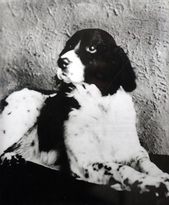 If you had Jim The Wonder Dog on your side today, you might be rolling in dough: The all-knowing Llewelyn setter had psychic