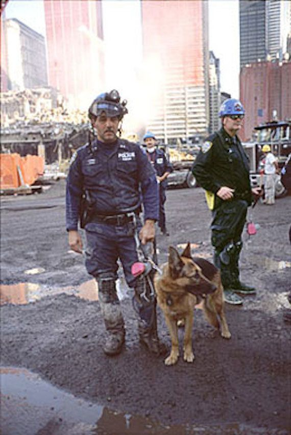 "In 2001, Apollo the German shepherd was awarded the<a href=""http://en.wikipedia.org/wiki/Dickin_Medal"" target=""_blank""> Dicki"