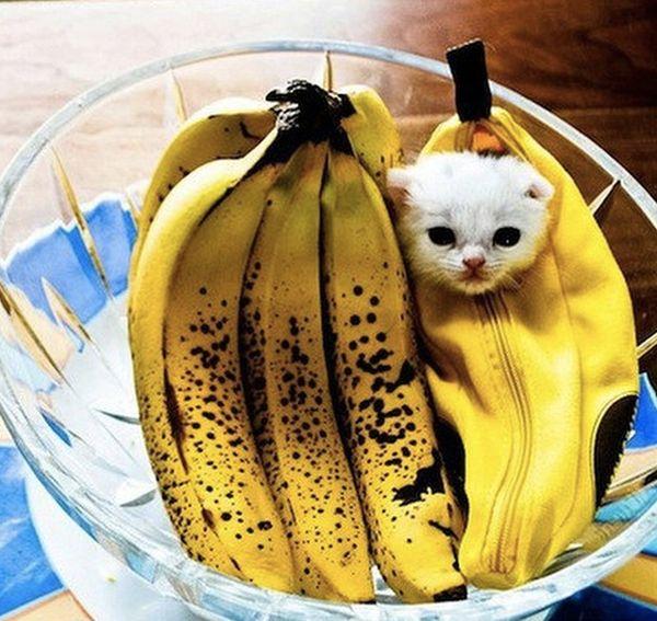 "<a href=""http://instagram.com/p/thpUpnAH1x/?modal=true"" target=""_blank"">This </a>is a <strike>banana</strike> kitten."