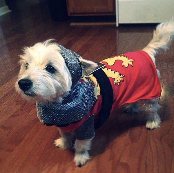 "We love a <a href=""http://instagram.com/p/tnJDC6iWHr/?modal=true"" target=""_blank"">dog in shining armor</a>."