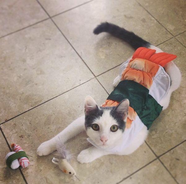 "Toku, the <a href=""http://instagram.com/p/svaT_xxznW/?modal=true"" target=""_blank"">sushi-cat</a>."