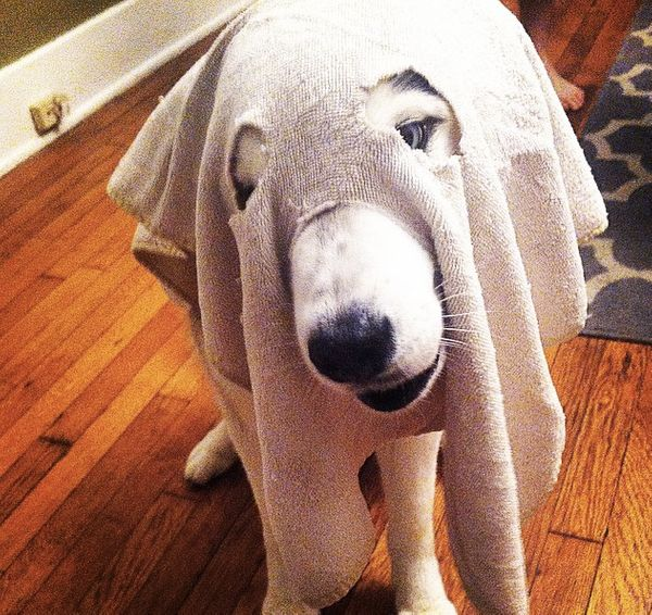 "This is <a href=""http://instagram.com/p/tjRWGBh3Dl/?modal=true"" target=""_blank"">a ghost dog</a>."
