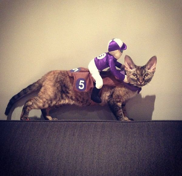 """This <a href=""""http://instagram.com/p/s_HQEBkXJc/?modal=true"""" target=""""_blank"""">cat looks confused too</a>."""