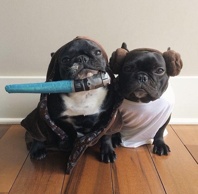 Bulldogs franceses disfrazados de Princess Leia y Obi-Wan Kenobi.