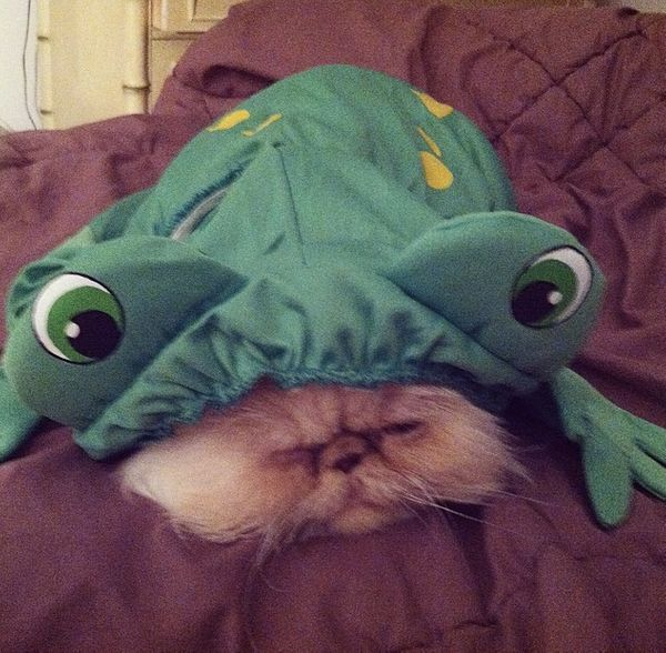 "<a href=""http://instagram.com/p/nl5bnQw1FT/?modal=true"" target=""_blank"">Daisy the cat-frog</a>."