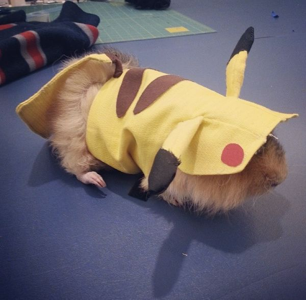 "<a href=""http://instagram.com/p/nOCiy8DIsY/?modal=true"" target=""_blank"">Guinea pig Pokémons</a> are the best kind of Pokémon."