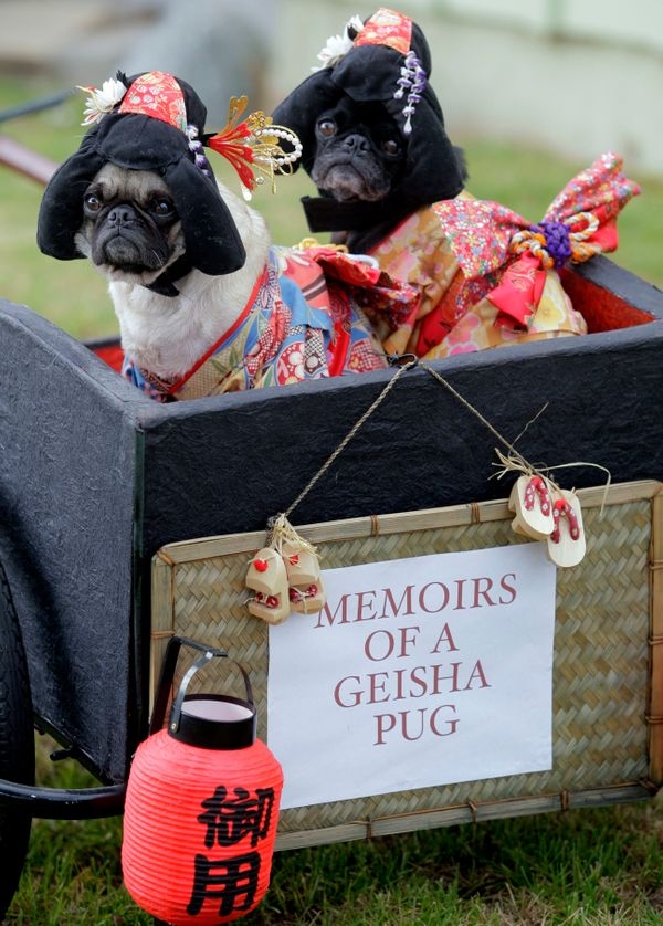 This photo taken Oct. 4, 2009 shows pugs Mochi, left, and Olive posing for a photo dressed as Geisha girls at they're home in