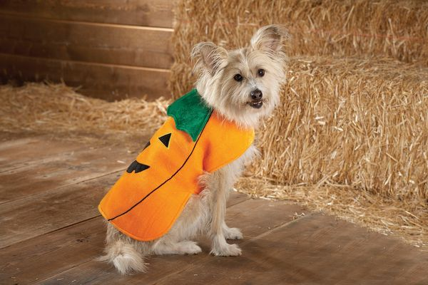 This product image courtesy of PetSmart shows the Top Paw Pumpkin Costume. Pet owners will dress up millions of dogs this mon