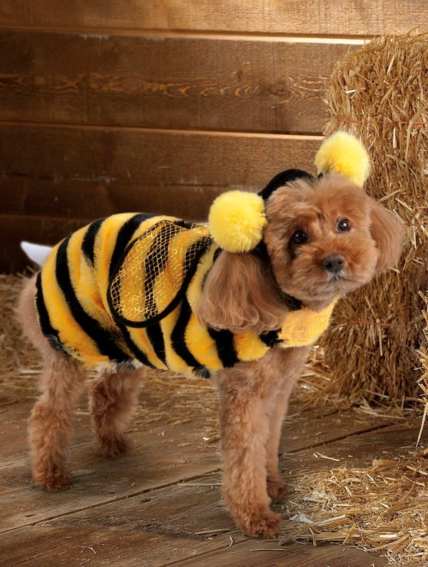 This product image courtesy of PetSmart shows the Top Paw Bee Costume. Pet owners will dress up millions of dogs this month f