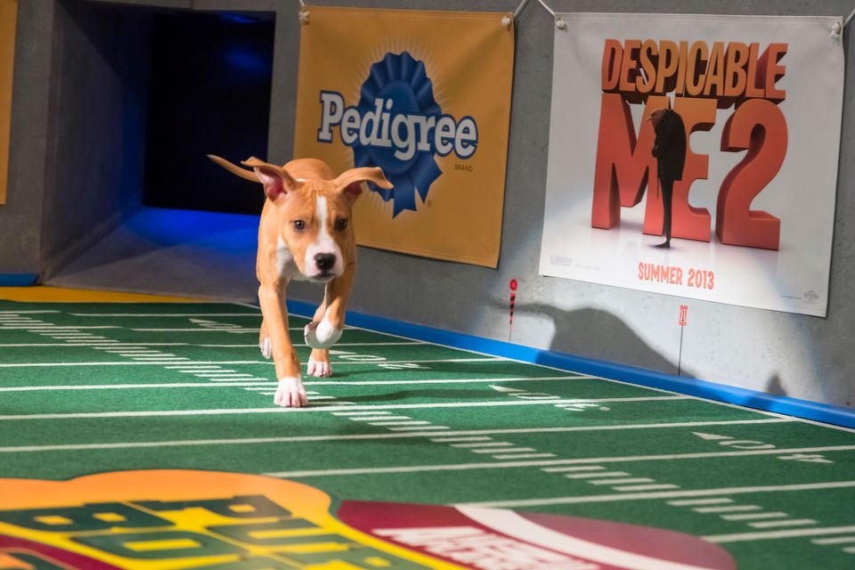 Dogs make their first entrance on the field during Puppy Bowl IX.