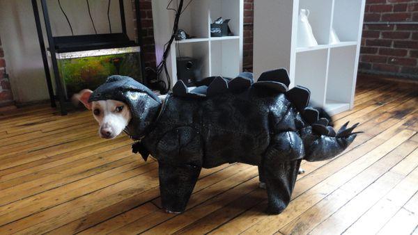 """""""Got drunk, <a href=""""http://imgur.com/gallery/wB9wfdj"""" target=""""_blank"""">bought a stegosaurus.</a> No regrets. Never regret Din"""