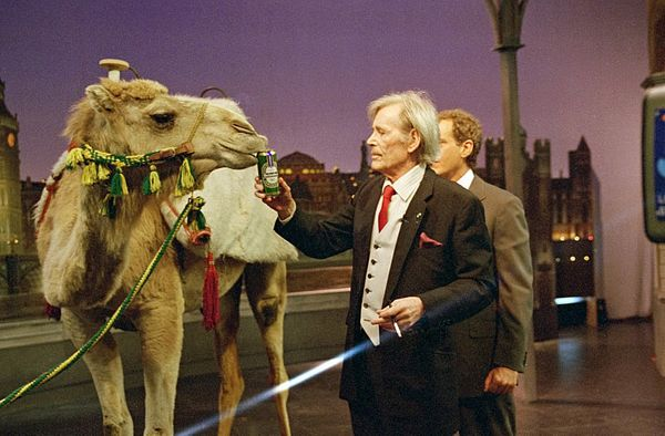 "Peter O'Toole makes a grand entrance riding a camel on ""The Late Show with David Letterman,"" May 17, 1995 on the CBS Televisi"