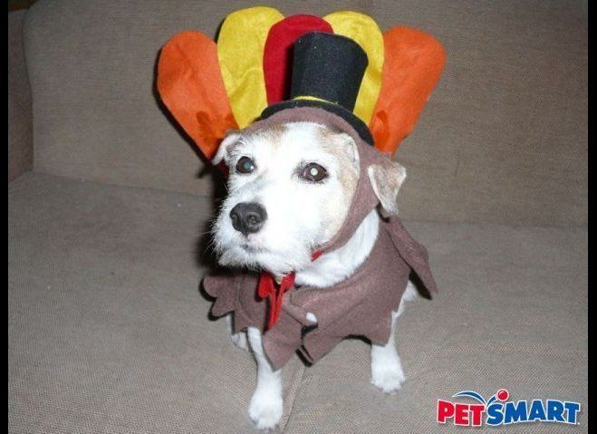 "It's one of our Founding Fathers, John Gobblesworth! (via <a href=""http://animal-pictures.petsmart.com/albums/userpics/16735/"