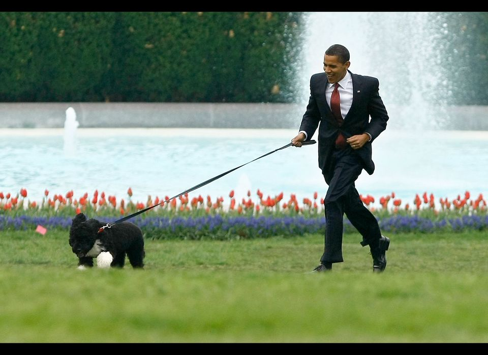 U.S. President Barack Obama runs with his family's new dog, a Portuguese water dog named Bo, on the South Lawn of the White H