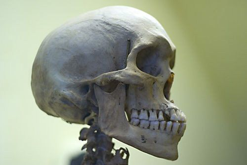Rethinking Laws Permitting the Sales of Human Remains | HuffPost