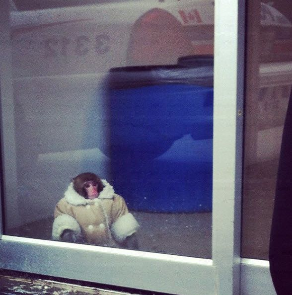 "@dzd_lisa: ""Anyone lose their monkey at Ikea?"""