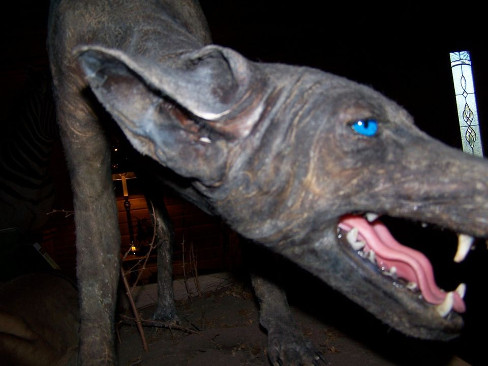 This animal may look like a dog, but a researcher in Cuero, Texas, believes it may be a chupacabra, a so-far mythical creatur