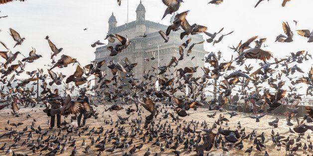 India, Mumbai (Bombay), Colaba, India Gate, Pigeons