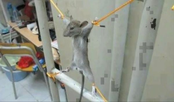 """They wouldn't do this to a mouse at Gitmo. But a Palestinian man in Gaza supposedly <a href=""""https://www.huffpost.com/entry/m"""