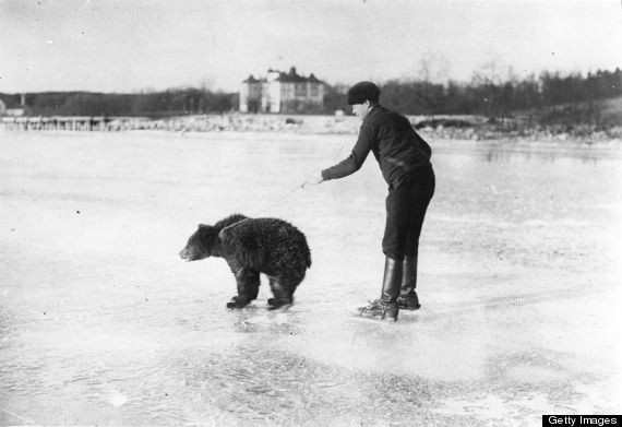 Most premium ice-skating bear in all of Russia... A Russian skater being pulled along by a bear on a frozen river around 1925
