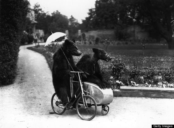 Two sophisticated brown bears riding on a bicycle and side car in 1928.