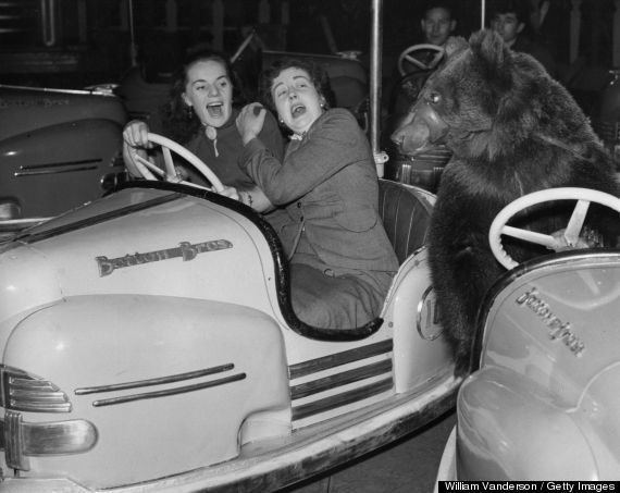 Two dodgem car passengers are surprised to see Susie the circus bear bumping into them at the fun fair attached to Bertram Mi