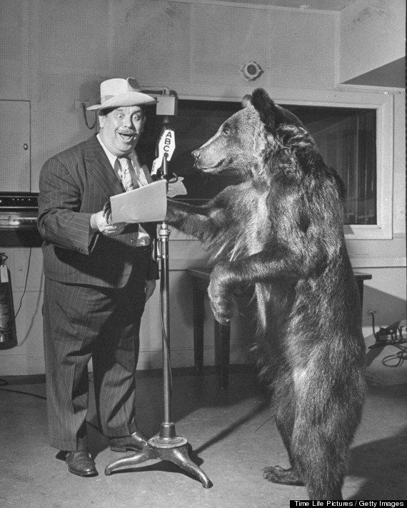 Trained bear named Rosie rehearsing for a radio program