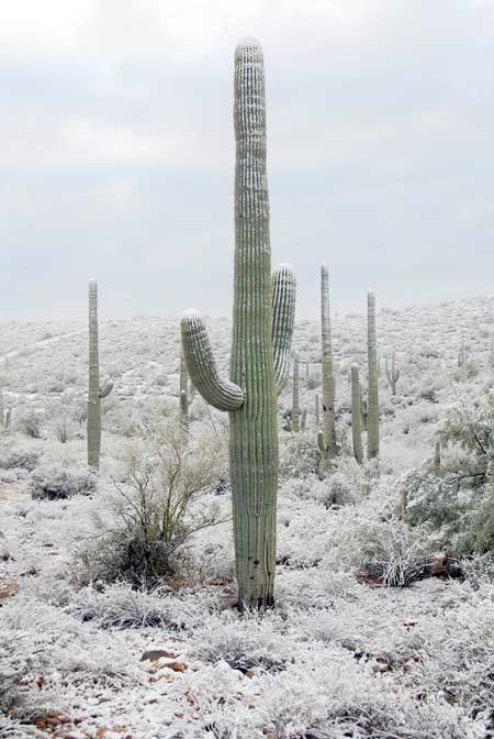 That big canyon isn't the only thing that's grand in Arizona. Consider this spiny Saguaro specimen.