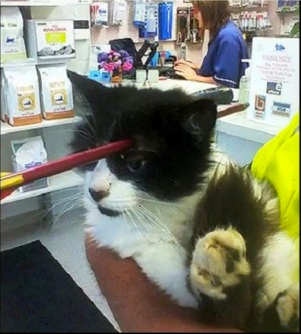 """Good thing cats have nine lives! <a href=""""https://www.huffpost.com/entry/moo-moo-crossbow_n_4170713?utm_hp_ref=anatomical-won"""