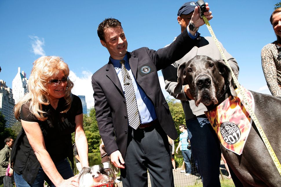 Giant George, formerly the world's tallest dog according to Guinness World Records, passed away this October, one month away
