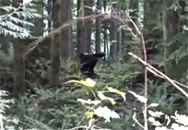 "After a <a href=""http://www.huffingtonpost.com/2013/07/30/bigfoot-video_n_3677127.html"" target=""_blank"">Canadian app company"