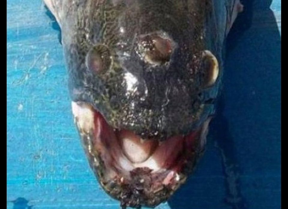 Three-eyed Fish found near Argentina. Source: GIzmodo