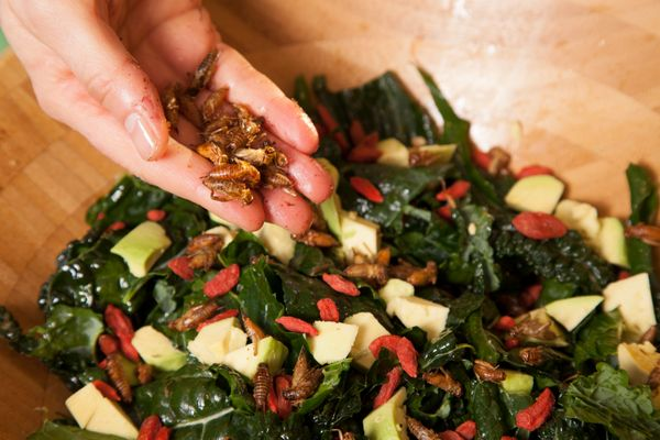 Martin likes to substitute crickets for croutons in her salads. She coats them in oil and garlic salt and oven roasts them un