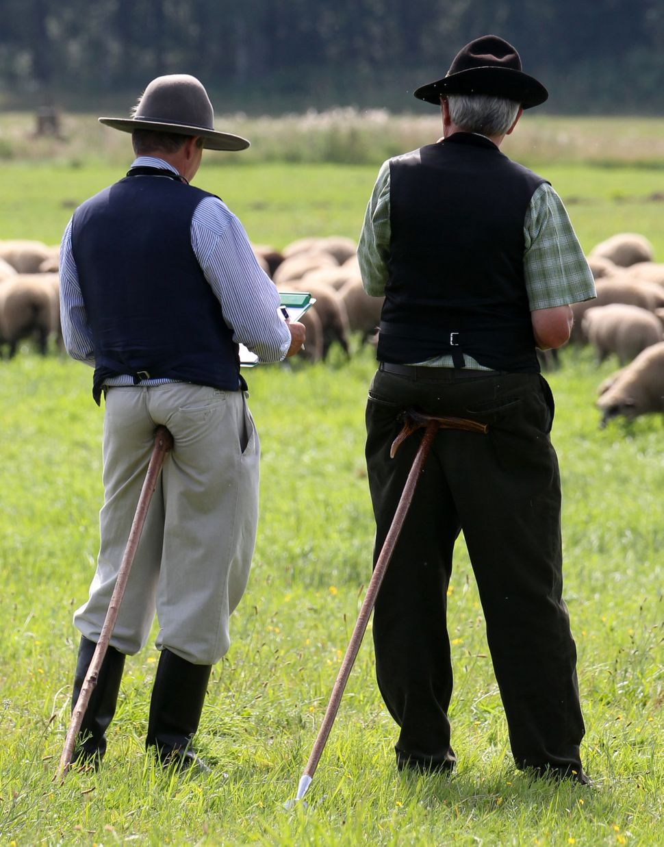 Two referees leaning on a cane watch sheep passing by during a professional sheperd contest in Schlesin, northern Germany. Sh