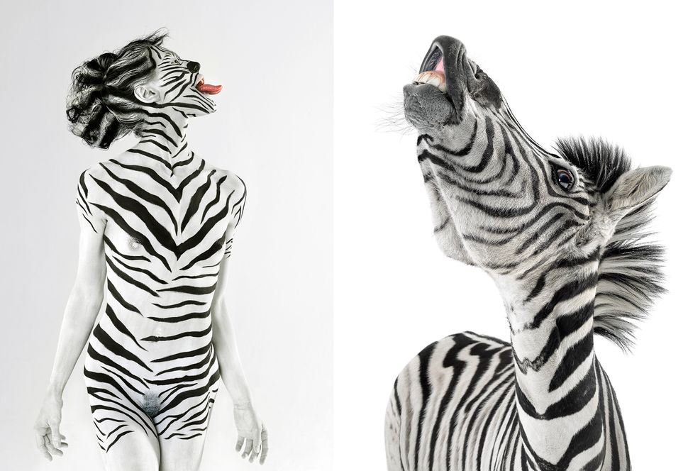 Model Jasmina poses like a Zebra with real zebra Ace in Los Angeles, California. (Lennette Newell / Bacroft USA / Getty Image