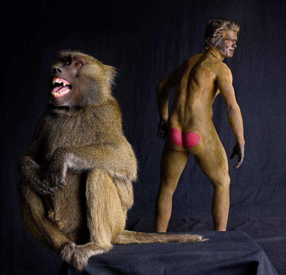 Model Paulo poses with baboon, Tabitha in Los Angeles, California. (Lennette Newell / Bacroft USA / Getty Images)