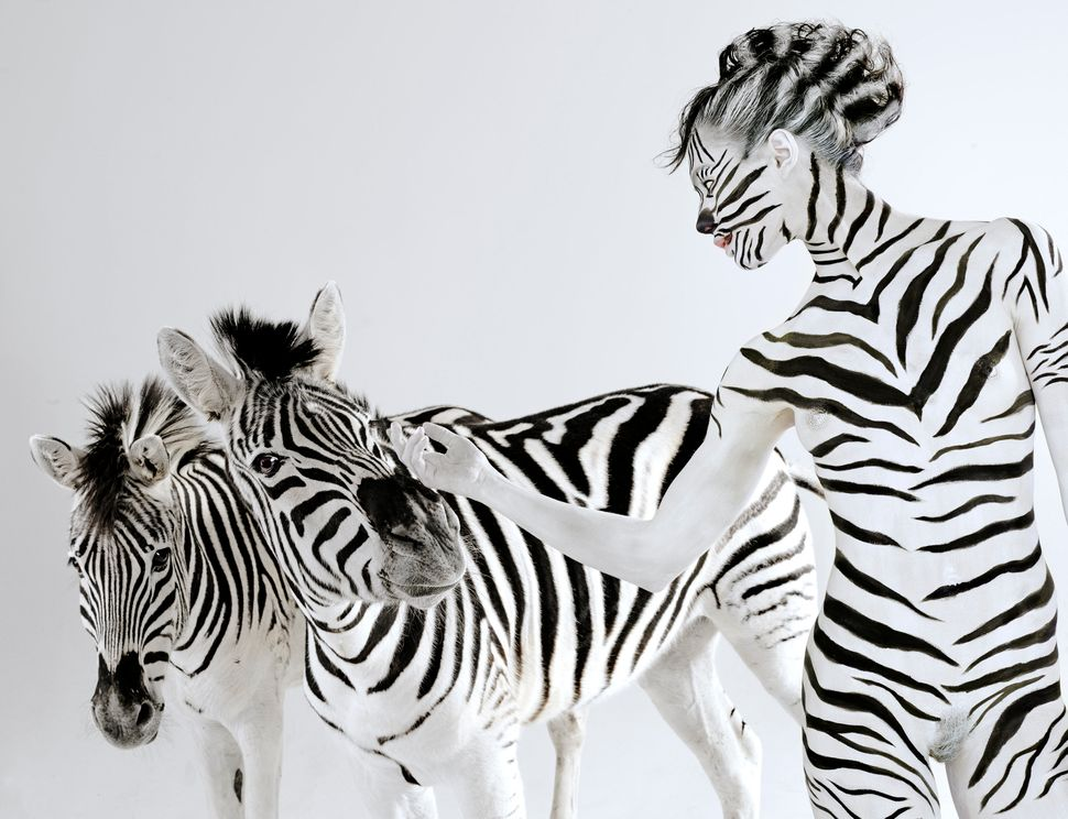 Model Jasmina poses like a Zebra with two real zebras, Ace and Stripes in Los Angeles, California. (Lennette Newell / Bacroft