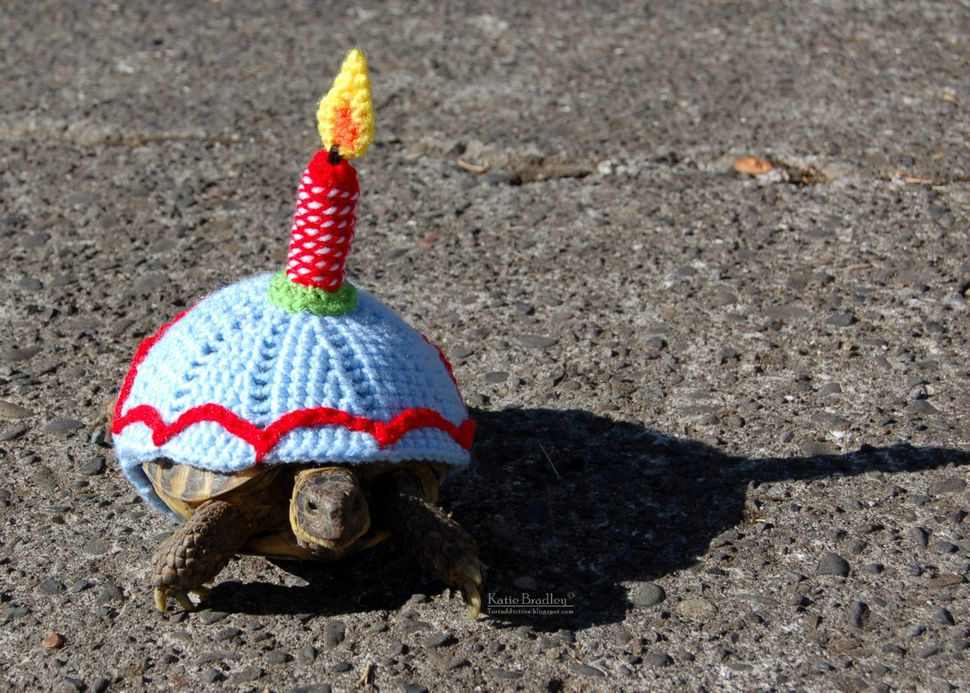 Snail And Tortoise Sweaters Really Do Exist And Theyre