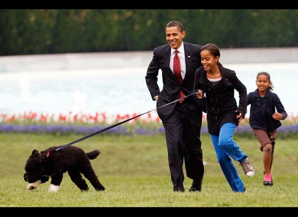 The Obama family's new dog, Bo, made his public debut in April 2009. The 6-month-old Portuguese water dog was a gift from Sen